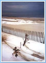 Rehoboth Beach during the winter with a fence and two plants in the sand